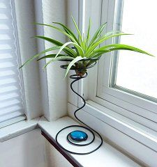 A new air plant home from Airplant.com