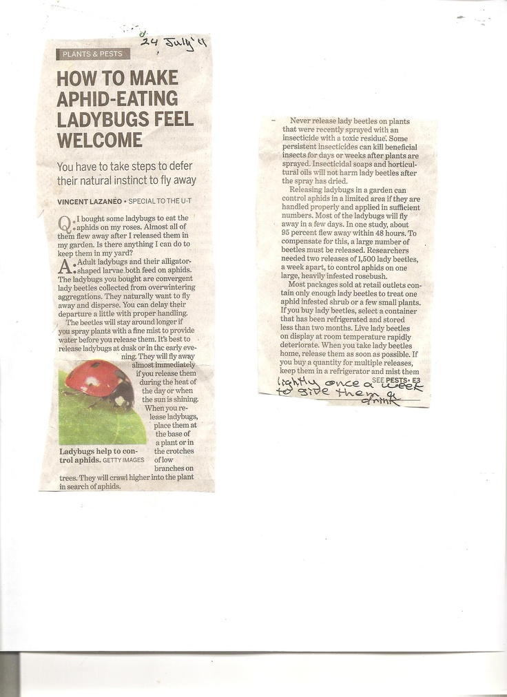 You may need to enlarge this; good article about lady beetles
