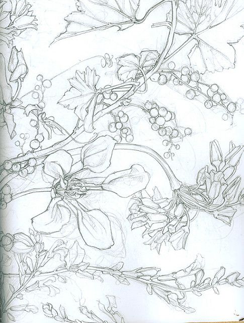contour flower drawing