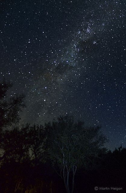 Limpopo Stary Night  The milky way as seen from the African Bushveld in the Waterberg (Limpopo Province, South Africa).