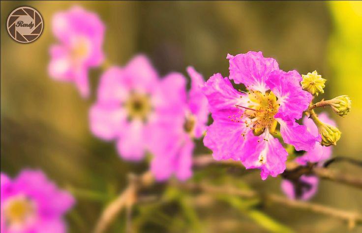 flower keruing