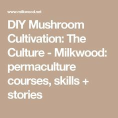 DIY Mushroom Cultivation: The Culture - Milkwood: permaculture courses, skills + stories