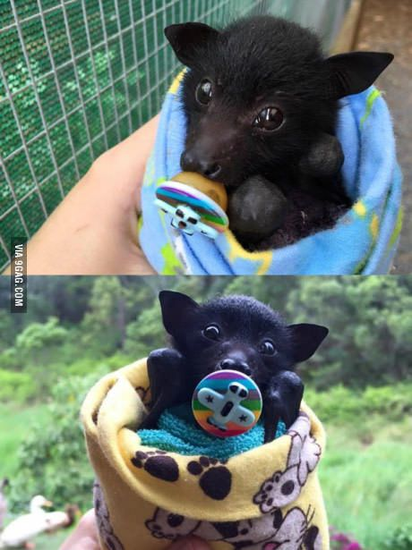 A baby bat with an airplane pacifier
