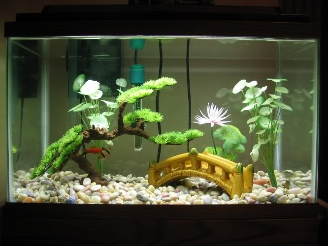 fish tank decorations 10 gallon - DIY Betta Fish Tank ... 10 Gallon Home Aquariums