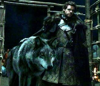 Greywind & Rob, until death did they part! Grey Wind is discovered along with his litter mates by Robb Stark and Jon Snow after the direwolves' mother has been killed by a stag. Like the other Stark direwolves, Grey Wind forms a special bond with his master. Like Robb, Grey Wind grows bold and faithful. Robb names him Grey Wind due to his fast speed when running. During Tyrion Lannister's return to Winterfell, Rickon Stark arrives with the direwolves, Summer, Grey Wind and Shaggydog in tow…