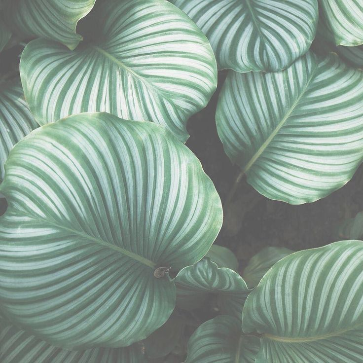 Some green inspo to start your morning! #greenery #oxygen #liverpoolst