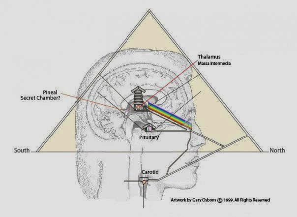 Pineal Gland: Portal of Higher Dimensions ~ RiseEarth