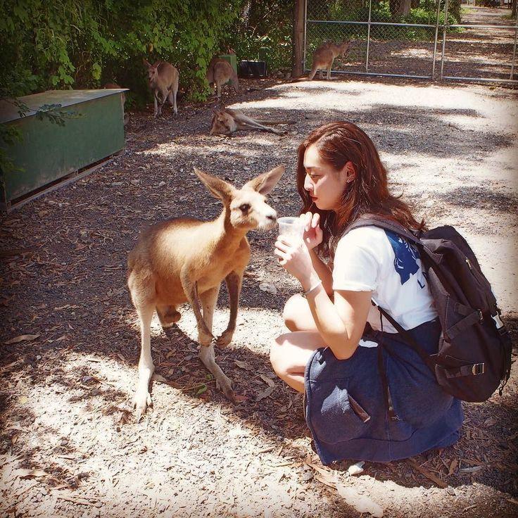 My dream comes true #Australia#AUS #currumbin#currumbinwildlifesanctuary#zoo#kangaroo #JAPAN#TOKYO#girl#me#instagood  2月に#ゴールドコースト 行って #オーストラリア いいなって思って 今度は都市変えて行きたいなって考えてたら そのお願いが意外にもあっさり叶いました  5月後半に#ケアンズ 行ってきます わーい 研修だけどねそれでも楽しみ  また#カンガルー 見れるかな こんな近くで見ることないからガン見するよね笑 #どーせ行けるなら#パースで#クォッカ見たかった #去年のシンガポールから #割とコンスタントに#旅行 行けて #とっても#しあわせ #暑いとこばっか行ってるせいか #この頃常に黒い笑 #日本じゃ絶対#リュック#なんか背負わない #似合わないから by 382sayaka http://ift.tt/1X9mXhV