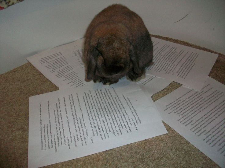 bunny helping with the editing