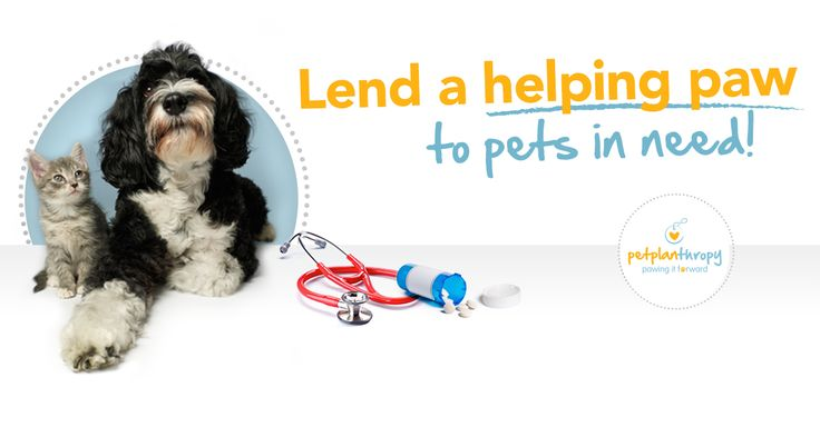 Can You Donate Dog S Unused Medications