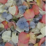 Freeze dried flower petals, for aisle or tabletops. Biodegradable!