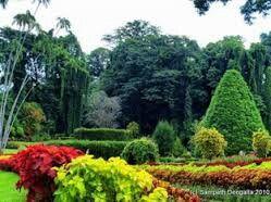 Botanical garden in Kandy, Sri Lanka For individual tours contact us: 0094774057757 , susantha2803@gmail.com