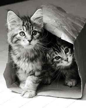 why do i not have a kitten?!?! :(