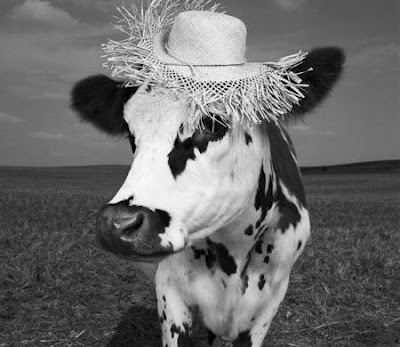 cow-cow