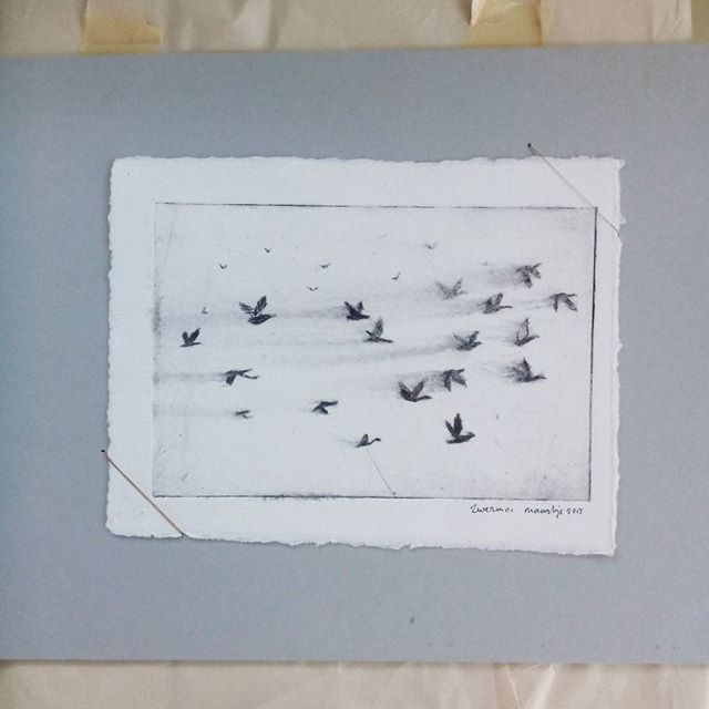 always a good idea to go through a drawer filled with old work. yesterday I found this etching with a flock of geese. . . . . . . . . .  #ets #etching #swarm #zwerm #signedandnumbered #birds #flock #air #sky #ganzen #geese #flock #grafiek #oneoff  #Regram via @www.instagram.com/p/BSydsH4FpFj/?saved-by=kristamccurdy