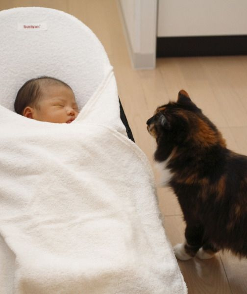 How to Introduce Your Cat to a New Baby   PawNation