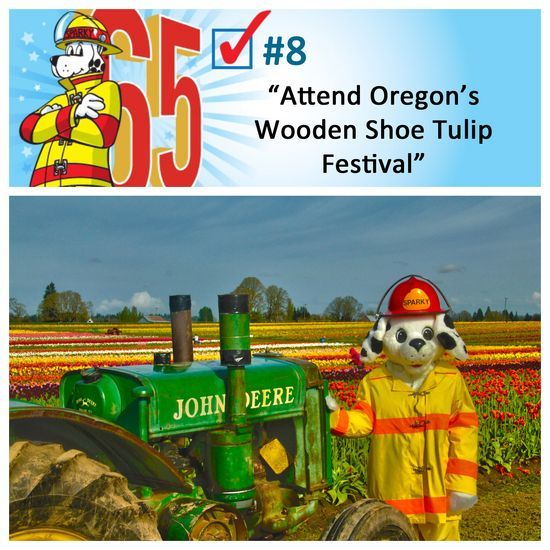 Attending the Tulip Festival in Oregon should be on everyone's #bucketlist! #Sparkys65th