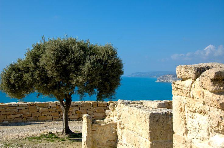 Wunderschöner Blick auf das Mittelmeer #zypern #kourion #olivenbaum #urlaub #reiseziel