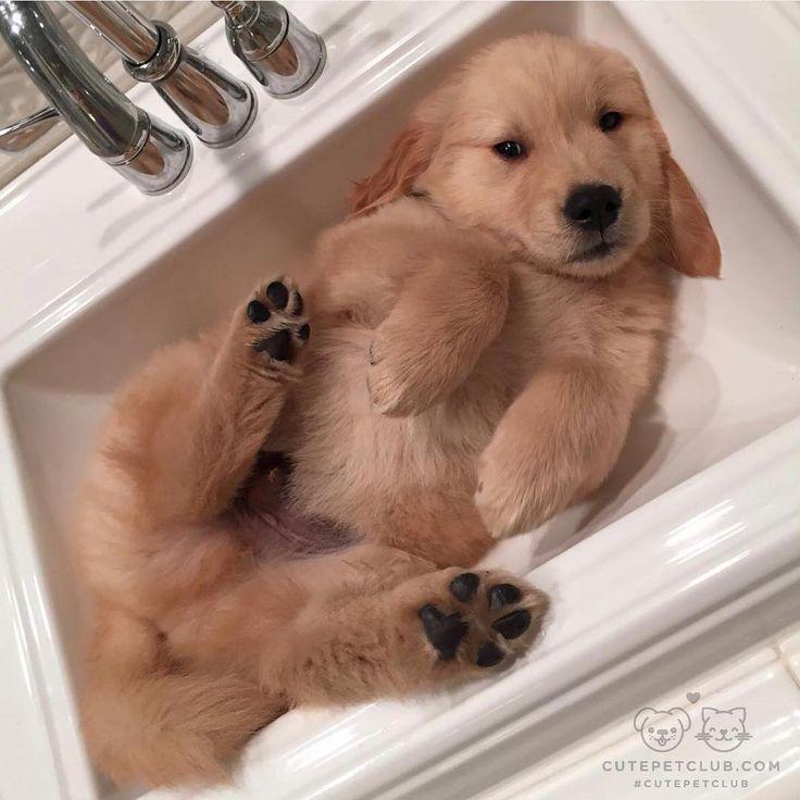 Bath Time #cure #pets #love https://instagram.com/p/BNfbnovjVWq/