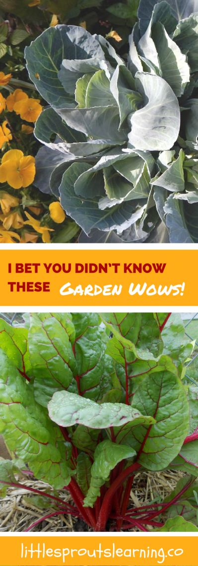 Garden Wows! Here are some things I have learned about the garden that made me say, WOW! You're not going to believe it. Did you know if...