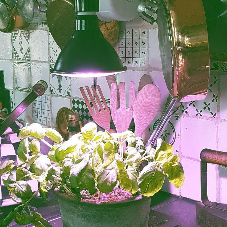 Klapptips! Köp en växtlampa i julklapp  perfekt för den som vill odla inne dra upp frösådder eller vill så inomhusväxterna att trivas extra bra. Största urvalet hittar du hos oss #julklappstips #växtlampa #växtbelysning  #odlaiköket #frösådd #odlainne #wexthuset
