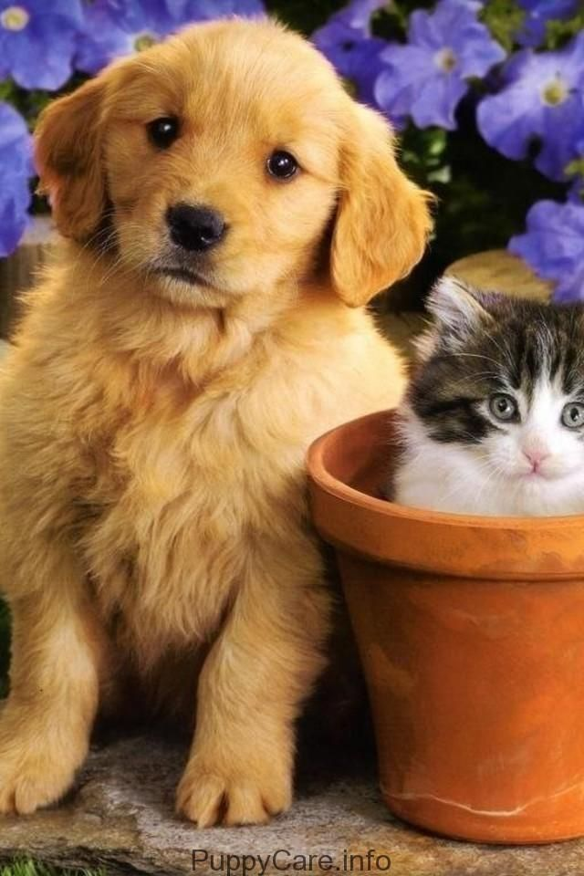 Cute Puppies You Ll Have To See 232 Who Does Not Love Puppies