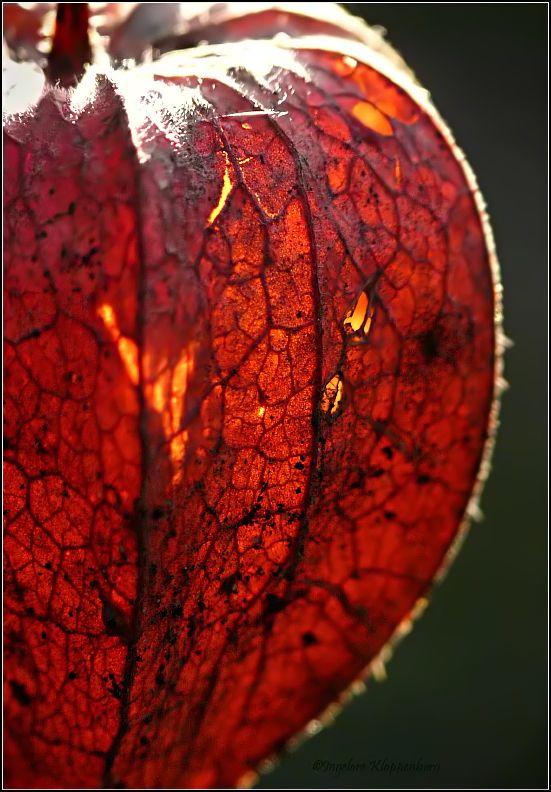 lantern by Ingelore on deviantART