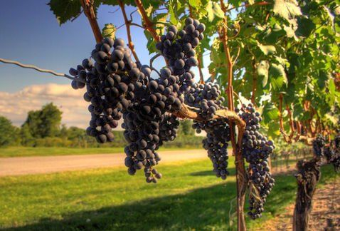 Una enóloga de Tasmania inventa una técnica de vinificación que puede cambiar el mundo del vino por completo - RECETUM Noticias de vinos y gastronomía