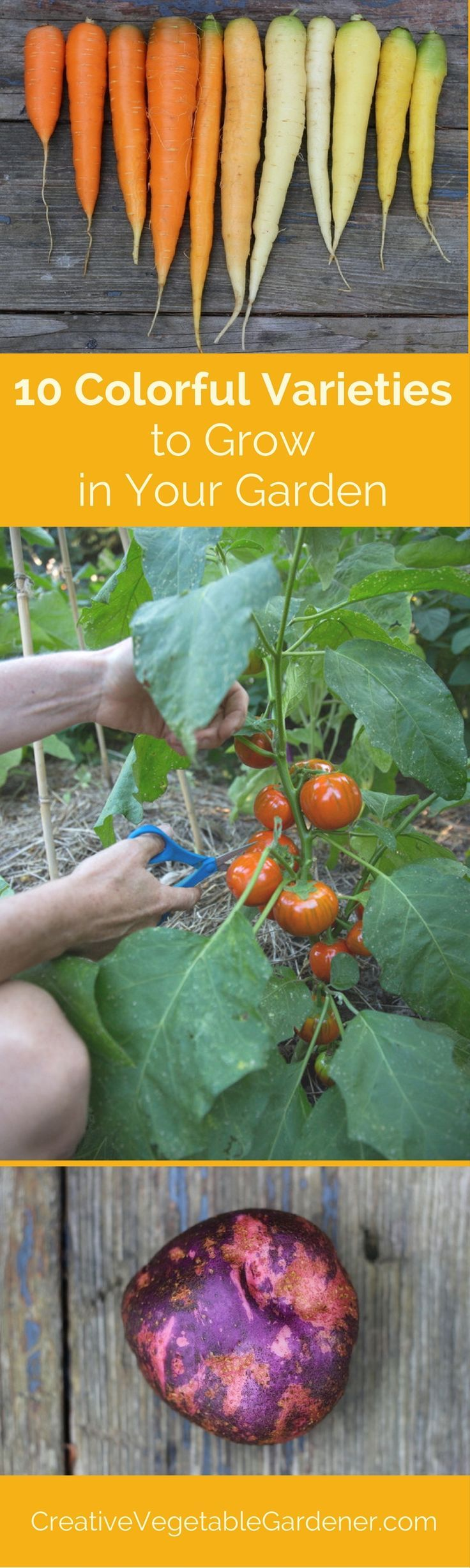 How To Grow Your Own Vegetables In Pots