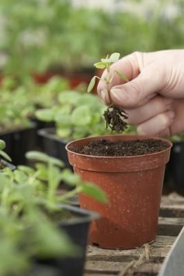 How to A Guide to Grow a Successful Ve able Container Garden