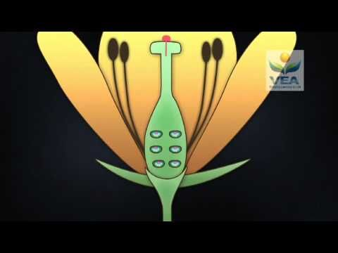 Sexual reproduction in flowering plants an excerpt from for Design reproduktion