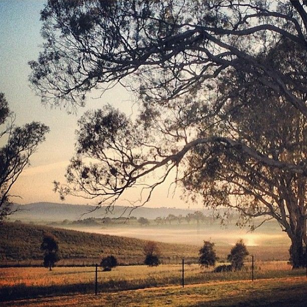 Morning in Murrumbateman, New South Wales (30 km north-west of Canberra)