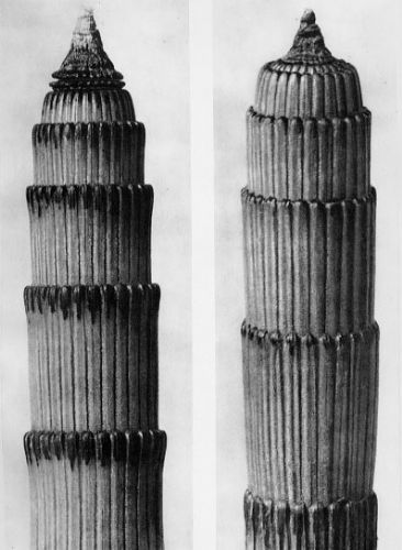 Karl Blossfeldt, Equisetum hyemale, Dutch rush