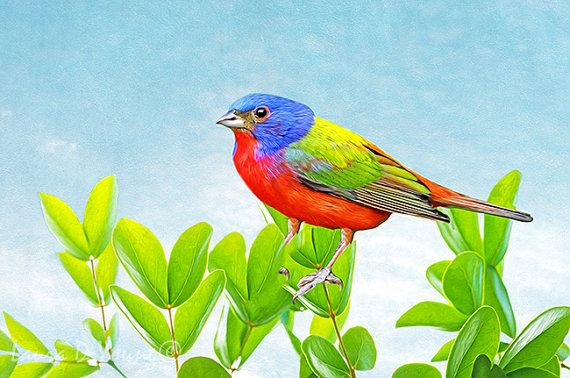 Painted Bunting Bird on Branch Bird Art Print by FineArtography