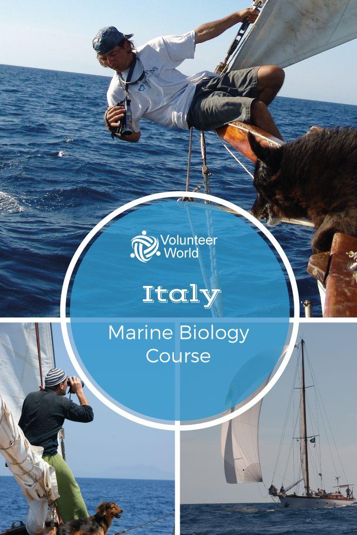 50+ best Volunteer in Marine Conservation images on Pinterest ...