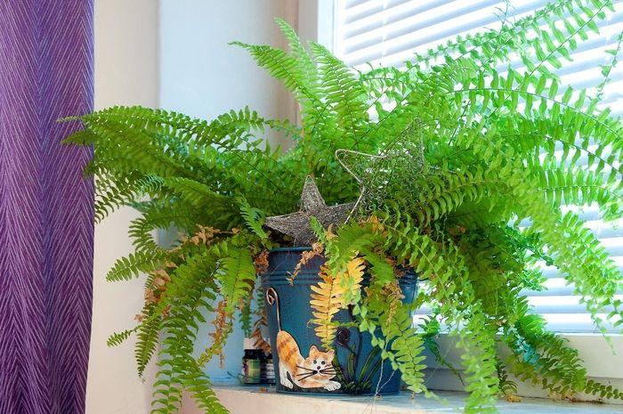 10 pokojových rostlin, které fungují jako čističky vzduchu