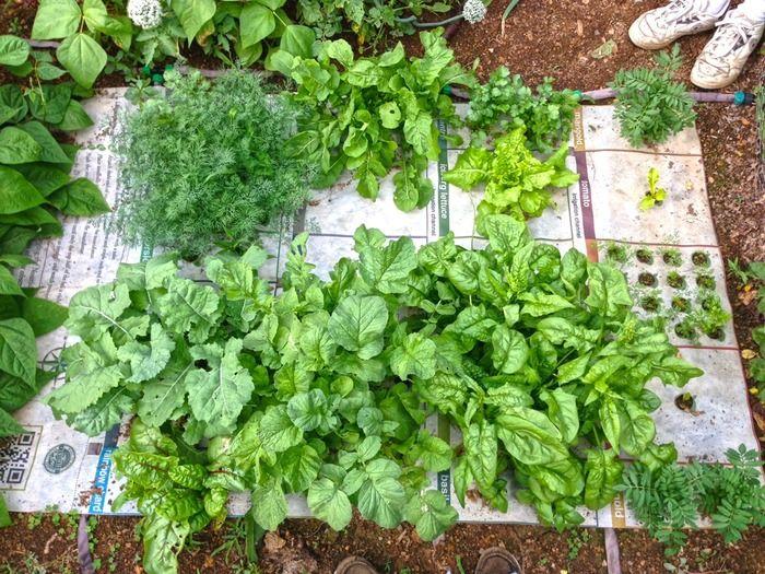 mata do sadzenia roslin/ ziół  https://www.kickstarter.com/projects/2083391547/nourishmat-changing-the-way-wethink-about-food