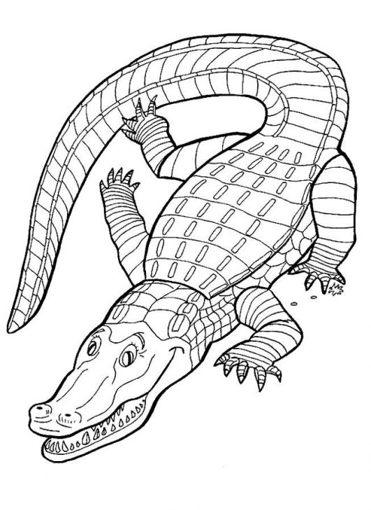 animal alligator coloring page printable