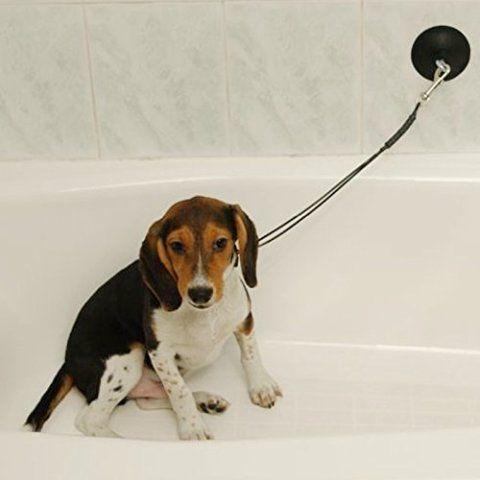 The Best Way To Wash A Dog - Tips, Tricks and Hacks | Petslady.com #dogtipsandtricks