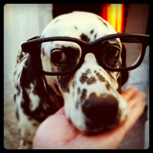 My dalmatian genius!