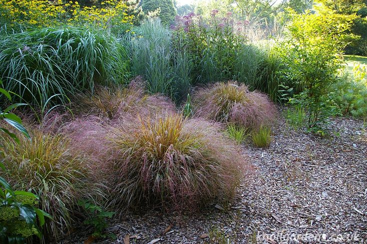 Best 25 stipa arundinacea ideas on pinterest stipa for Ornamental grasses that grow in shade