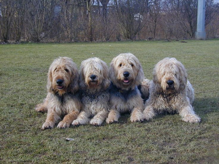 196 best Dog Breeds images on Pinterest   Species of dogs ...
