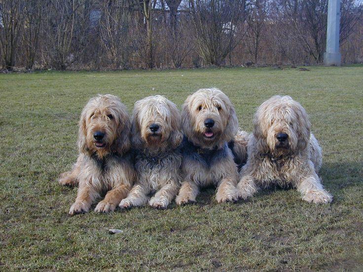 1000 Images About Dog Breeds On Pinterest Dogs Black