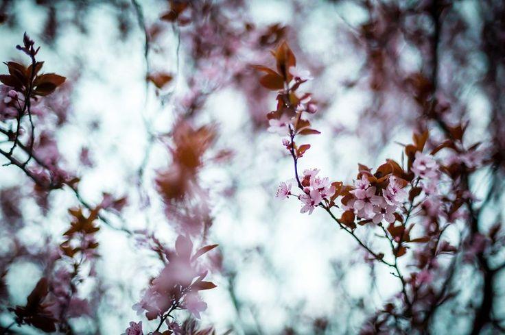 #nature #natural #naturephoto #naturephotographer #naturelovers #winter #flower #tree #beautiful