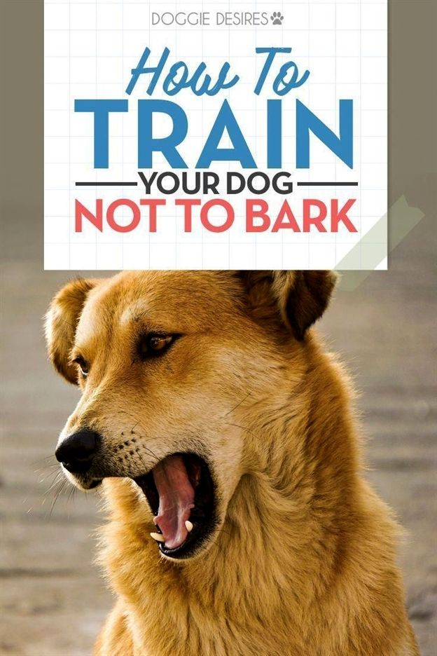 Dog Training Ball Dog Training To Protect Dog Training German