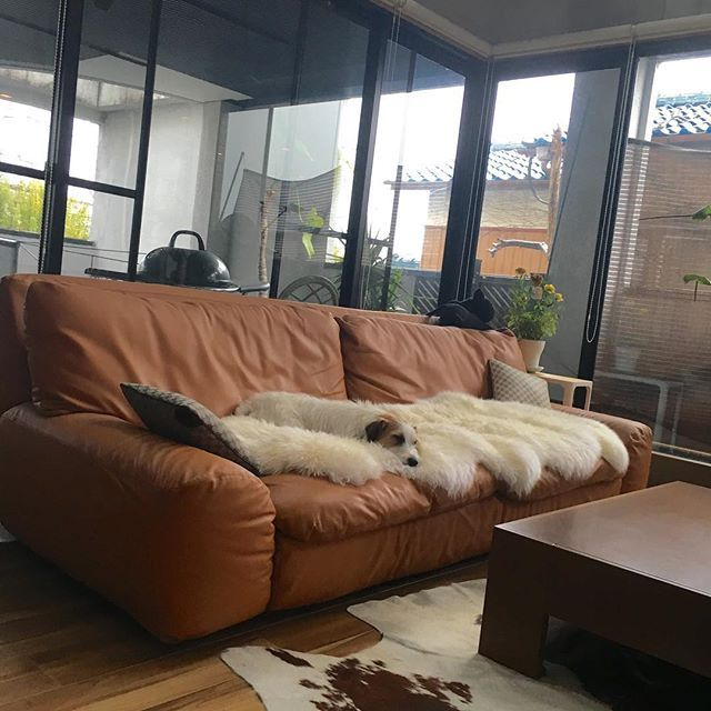 Instagram media hironmama - あら、虎は? どこにいるかわからない位、同化しています^ ^ 遊び疲れて、気持ち良さそうに眠っています。  #アルフレックス#ベンゴディ#とらのすけ#犬#いぬ#いぬばか部  #ふわもこ部 #じゃっくらぶ#うじゃっく#ジャックラッセル#ジャックラッセルテリア#jack#jackrussell#jackrussellterrier #jacklove#jrt#jrtlove#dog#pet #instadog#instajack#instapet