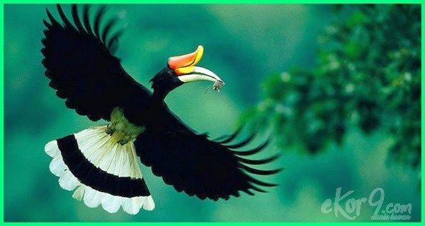 11 Hewan Khas Indonesia Yang Harus Kamu Tau Ekor9 Com Hewan Binatang Flora