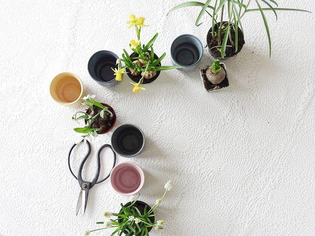 Keramikbecher als Pflanzgefäße nutzen   Mein kreativer Arbeitstisch und meine liebsten, einfachen DIYs   http://mammilade.blogspot.de   Personal Lifestyle, DIY, Interior Blog
