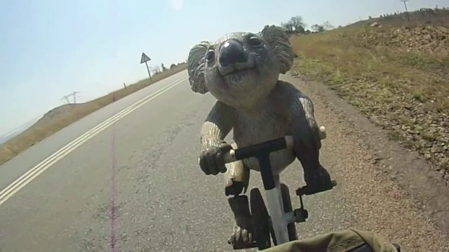 Koala rides bicycle... through Africa! Katie, the cycling koala, rode 8000 kilometres across 10 nations from Kampala to Cape Town, for African kids.
