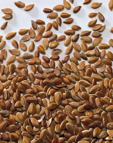 Heilpflanzen-Lexikon: Leinsamen Leinsamen enthält Schleimstoffe, die im Darm aufquellen und dadurch die Verdauung anregen. Diese Wirkung ist intensiver, wenn die Samen aufgebrochen sind